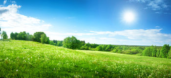 Field with dandelions and blue sky Royalty Free Stock Image