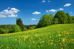 Field with dandelions and blue sky Royalty Free Stock Photo