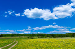 Field with dandelions and blue sky Royalty Free Stock Photography