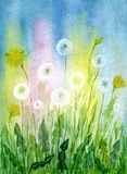 Field of dandelions. Hand-painted watercolor illustration and paper texture Royalty Free Stock Photography