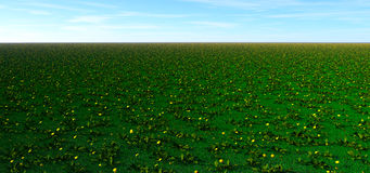 Field of weeds Royalty Free Stock Photography