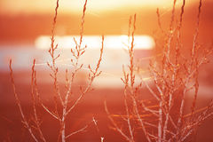Field dawn is in the sunlight. landscape with twigs and cobwebs. Background Royalty Free Stock Photos