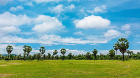 Field on daylight with cloud Royalty Free Stock Photos