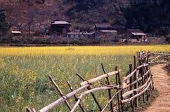 field den guld- rapeseeden Arkivfoto
