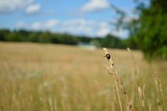 The Field der Hoffnung Lizenzfreies Stockfoto