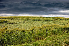 Field destroyed by storm Royalty Free Stock Photo