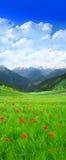 field det gröna berg Arkivbild