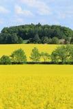 The Field di orzo verde e della colza gialla Fotografie Stock