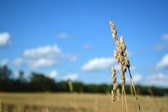 The Field di speranza Fotografia Stock Libera da Diritti