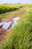 Field dirt road Stock Image