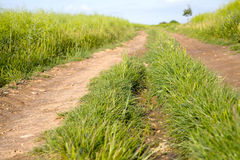 Field dirt road Royalty Free Stock Photo