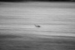 Field. Doe running in field(abstract Stock Photos