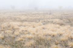 Field, bush, autumn, foggy day royalty free stock image