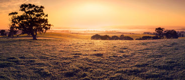 Field of Dreams Royalty Free Stock Images