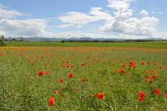 Field of dreams Royalty Free Stock Photography