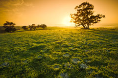 Field of Dreams Royalty Free Stock Photos