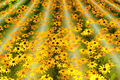 Field of Dreams Royalty Free Stock Image
