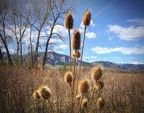 Grassy Field with view of Boulder FlatIrons Royalty Free Stock Photos