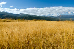 Rural landscape with meadow. A peaceful image of rural field with golden dry grass, blue sky with clouds and small mountain in background Royalty Free Stock Photos