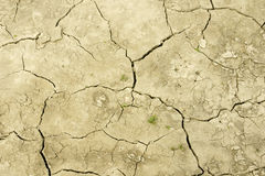 Field after drought Royalty Free Stock Photos