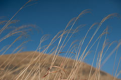 Field of dry grass Royalty Free Stock Photography