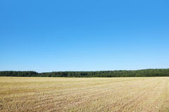 Field with dry grass. Near wood Stock Photos