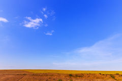 Field of dry grass Royalty Free Stock Image
