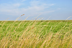 Field with dry plants Royalty Free Stock Photo