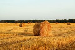 Field with dry yellow grass and haystacks on a sunset. Autumn landscape stock photo
