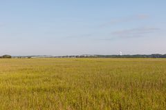 Field of dune grass on the coast Stock Image