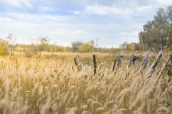 Field with ears and old broken wooden fence. In country Royalty Free Stock Photo