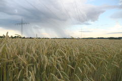 Field with ears of wheat on a background of Thunderstorm Stock Photos