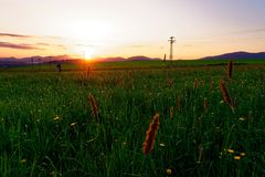 Field, Ecosystem, Grassland, Prairie stock photography