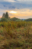 Field and edge of the forest at sunset. Early autumn Royalty Free Stock Photo