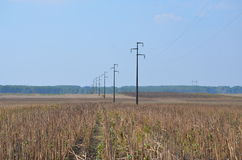 Field and electric poles. Electric network poles in the field Royalty Free Stock Image