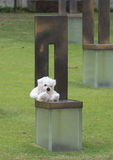 Field of Empty Chairs with White Teddy Bear, Oklahoma City Memorial Royalty Free Stock Image