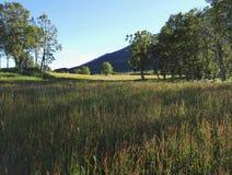 Green grass field Stock Image