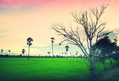 Field in the evening, Thailand Stock Photo