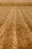 field fårarader Arkivbild