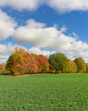 Field with Fall Autumn Forest Background and Cloudy Blue Sky Royalty Free Stock Photo