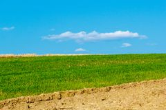 Field of Farmland Crops and Beautiful Blue Sky Above stock image