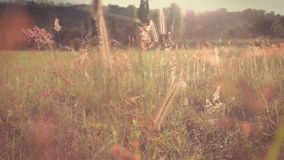 Field of feather grass stock footage