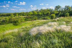 Field of feather grass under the blue sky Stock Photos