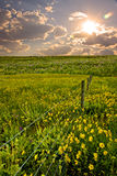 Field with fence stock photography
