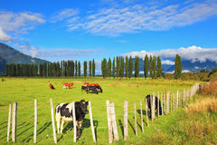 Field fenced low fence Royalty Free Stock Image