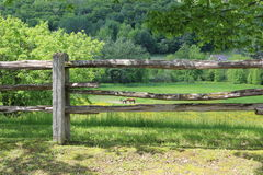 Field through the fences. With horses grazing royalty free stock photo