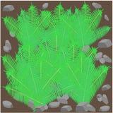 Field of fern Royalty Free Stock Image