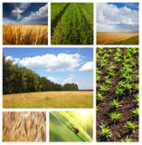 Field Royalty Free Stock Photography
