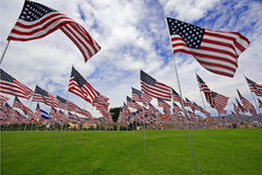 Field filled with American flags Royalty Free Stock Image