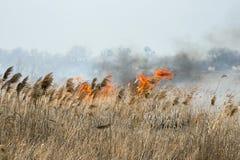 Field on fire Stock Photos
